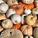 Gourds And Pumpkins by joan warburton