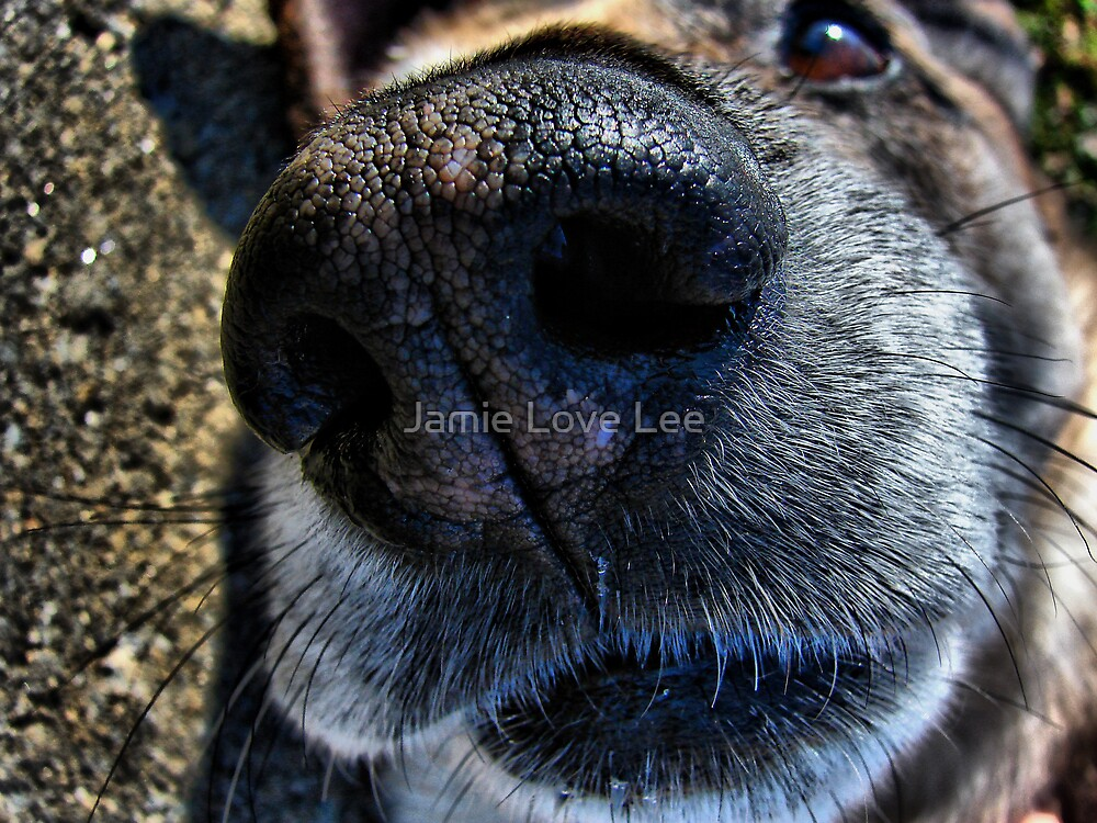 Nosey by Jamie Lee