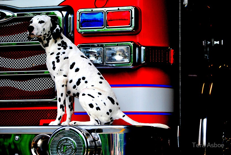quotfirehouse dogquot by tera asboe redbubble
