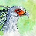 Watercolor secretary bird by purplesparrow