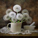 dandelions by dagmar luhring