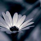 fleur by sabrina card