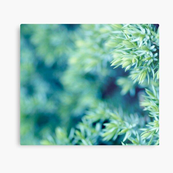 aqua forest Metal Print