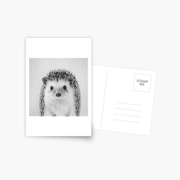 Hedgehog - Black & White Postcard
