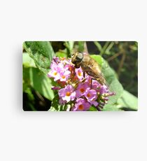 hoverfly on blossom Metal Print