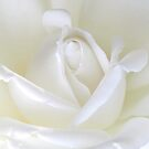 The White Rose by AnnDixon