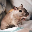Pepper the Gerbil by Monica Carvalho (mofart_photomontages)