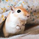 Bacon the Gerbil by Monica Carvalho (mofart_photomontages)