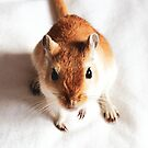 Ginger Young Gerbil by Monica Carvalho (mofart_photomontages)