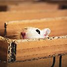 Hello from a White Gerbil! by Monica Carvalho (mofart_photomontages)