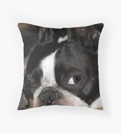 Boston Terrier Bailey Throw Pillow
