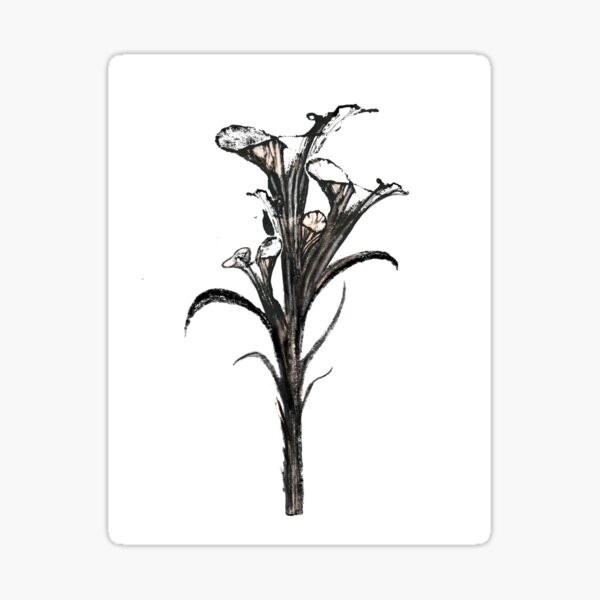Black Orchid Sticker