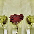 Vintage Roses by SexyEyes69