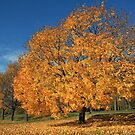 autumn colors by kathy s gillentine