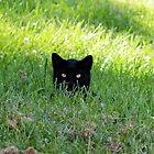 Panther in the Grass by FrankieCat