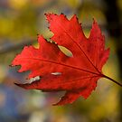 Autumn by charliebrown