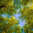 Treetops by charliebrown