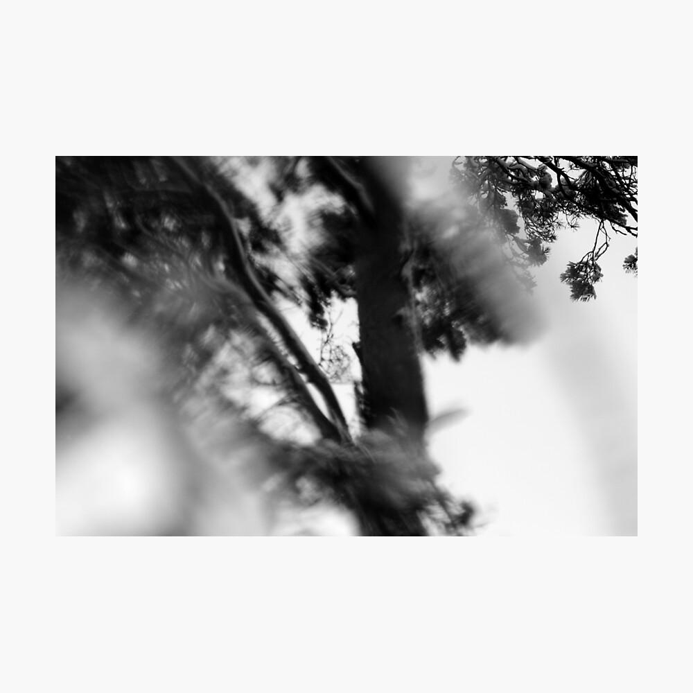 Nature #6 Photographic Print