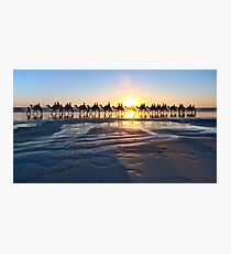 Camels, Broome, Australia Photographic Print