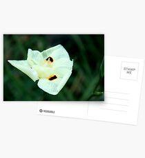 Unseen Breeze Postcards