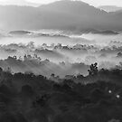 Misty morning in Black and white by afby