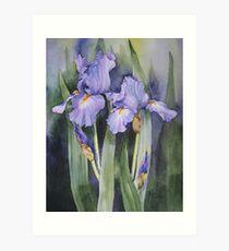 Mauve Iris Art Print