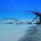 Stump Pass Beach by kathy s gillentine