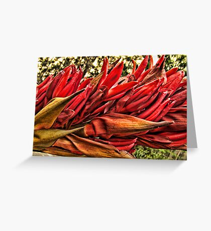 """""""Gymea Lily"""" Greeting Card"""