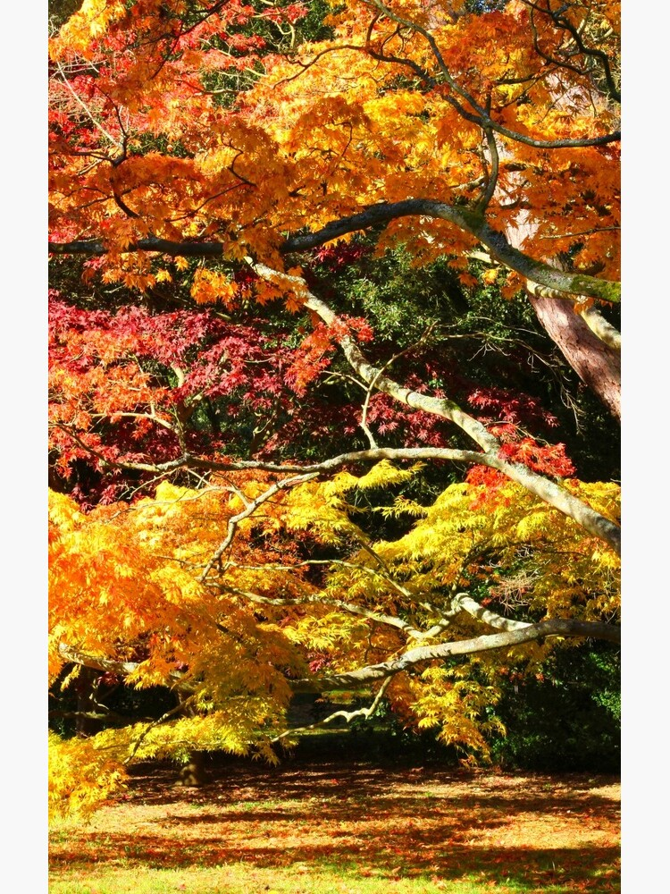 Autumn Acer Glade by JohnDalkin