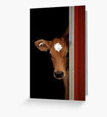 Little Bobby Calf Greeting Card