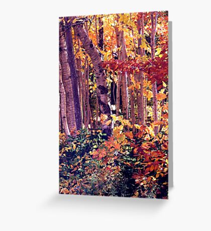 The Woods are Ablaze Greeting Card