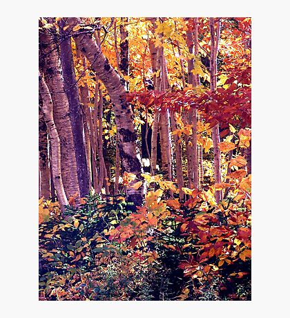 The Woods are Ablaze Photographic Print