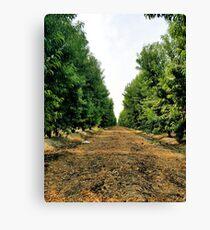 Peach Field(Nature) Canvas Print