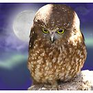 Whoooo me, okay , I did it for a hoot... by Elaine Game