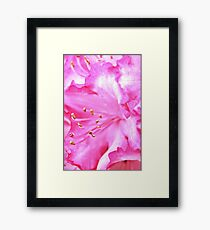 Pink Delicacy Framed Print