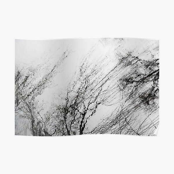 Winter Trees Reflections Poster