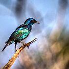Starling's Repose by Viv Thompson