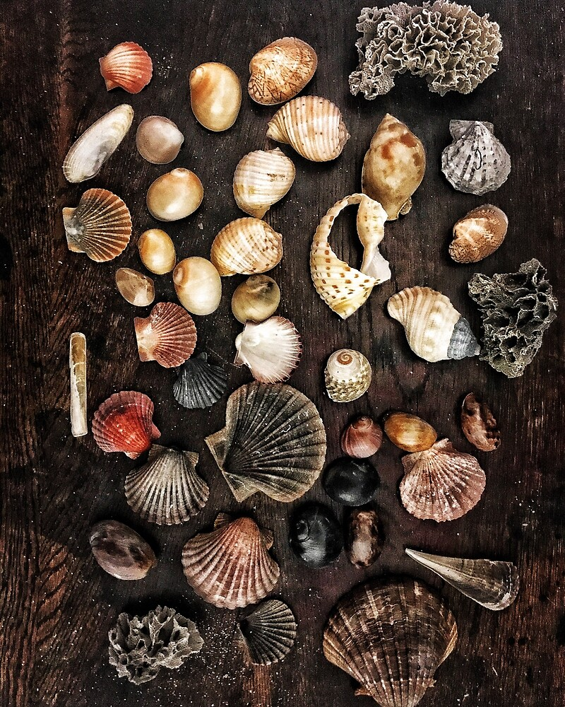 shell collection by Michelle Swan