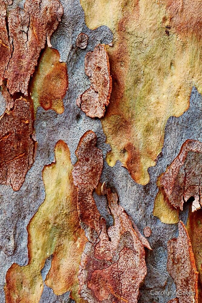 Tree Bark 2 by CarolynAGates