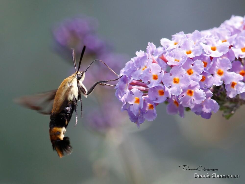 Hummiingbird Moth by Dennis Cheeseman