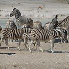 Zebras, Etosha National Park, Namibia by npdesign