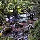 River Devon by Squealia
