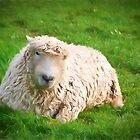 Curly ewe by missmoneypenny