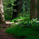 Redwood Path by Josef Grosch