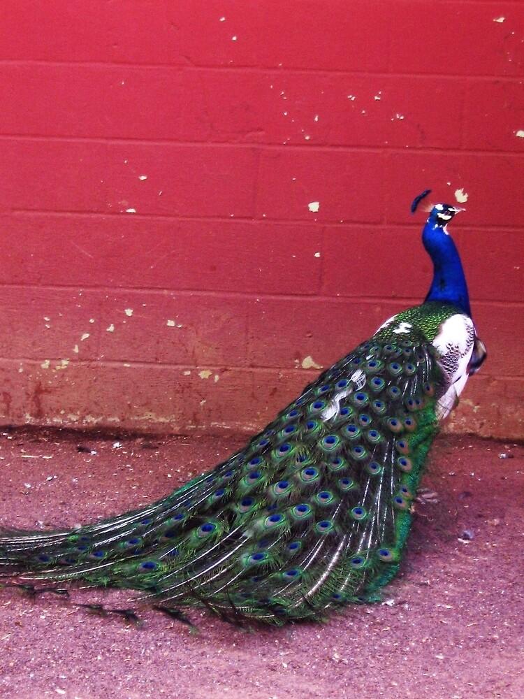 pretty bird by melissa cottrell