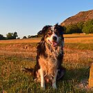 Funtime for Laddie by Michael Haslam
