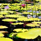 Water Lilies with Orton Effect \ Monet by Robert Armendariz