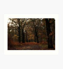 Beech lane in the woods Art Print
