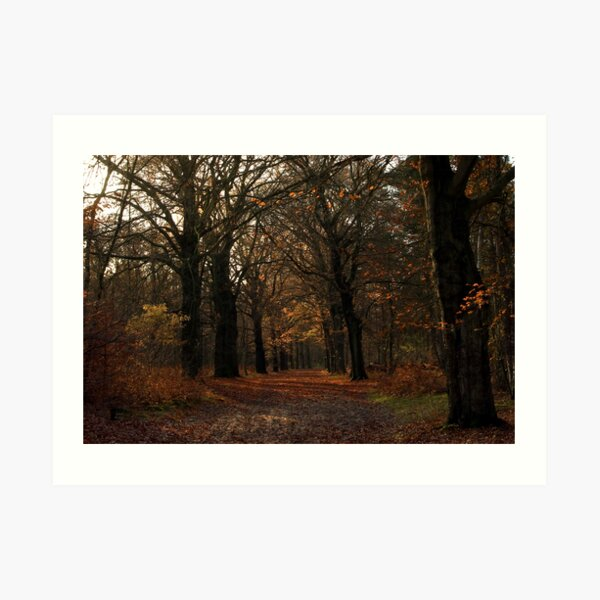Beech lane in the woods Art Print