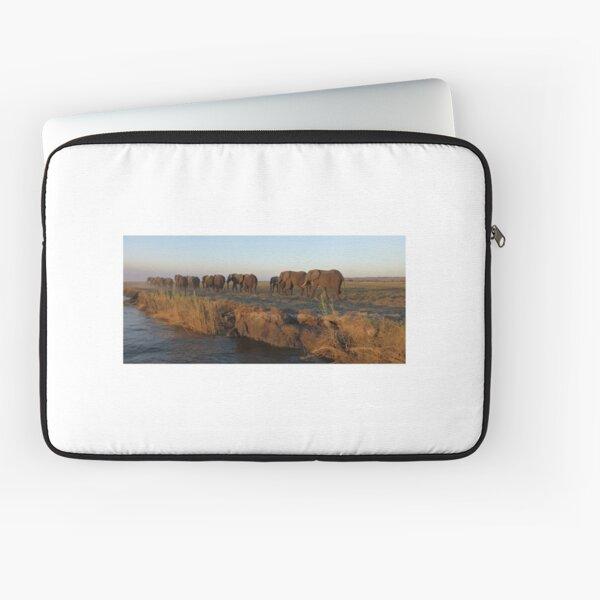 Elephants, Bachelor Herd, Chobe, Botswana Laptop Sleeve